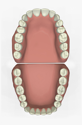 Illustration of 32 Teeth