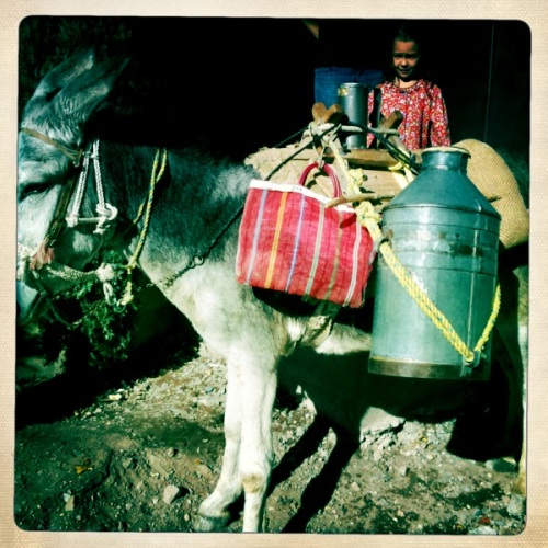 Photo of Raw Milk on Donkey